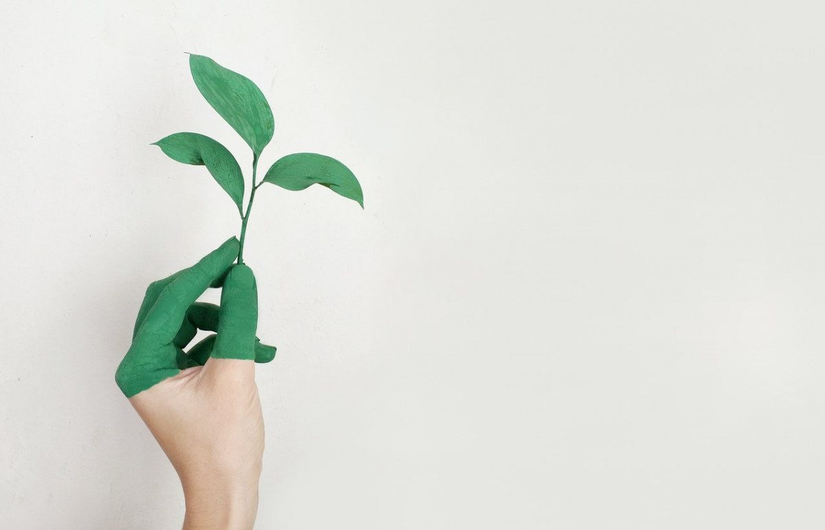 Sagal Group person-s-left-hand-holding-green-leaf-plant-886521-1200x771 Back in the Showroom Blog What's Happening